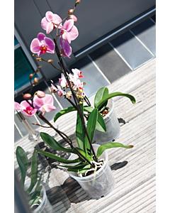 Orhidee istutuspott plast, läbipaistev/ 15x14,1cm