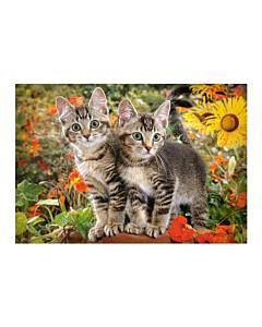 Pusle Castorland Kitten Buddies 68x47cm / 1500tk / LM