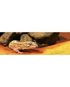Terraariumi dekor EXO TERRA Reptile Cave L koobas