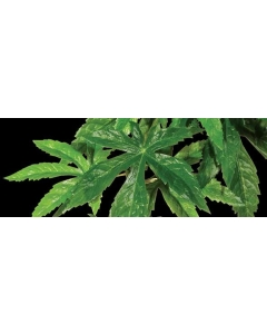 Kunsttaim terraariumisse Exo Terra Hanging Rainforest Plants Abuliton Silk