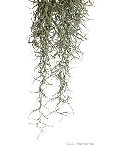 Spanish Moss terraariumi kunsttaim / Small