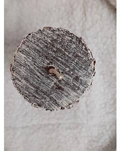 Küünal Mänd / K15cm /LM