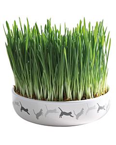 Керамическая миска + трава для кошек