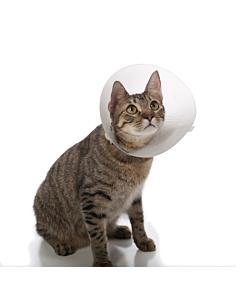 Kanditud plastkrae kassile või koerale / kaelaümbermõõt 17-30cm,krae laius 13cm