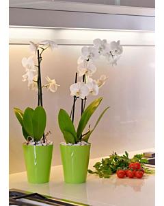 Orhideepott Clivo, laimiroheline / 12,5cm