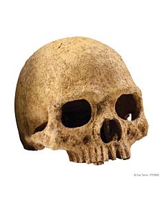 EXO-TERRA Human Skull terraariumi dekoratsioon/varjend Inimese pealuu