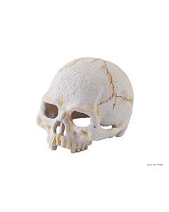 EXO-TERRA Primate Skull terraariumi dekoratsioon/varjend Inimese pealuu