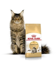 Royal Canin FBN kassitoit Maine Coon 31 / 4kg