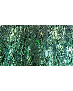 Terraariumi tagaseina taust kahepoolne / 60x150cm