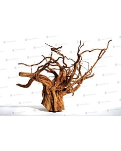 Triivpuu Red moor Wood, mini / 10-20cm