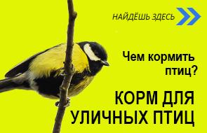 HS väike RUS - õuelinnud